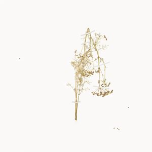 Silphium- The Extinct Plant of Love Silphium by Juan Zamora contemporary artwork