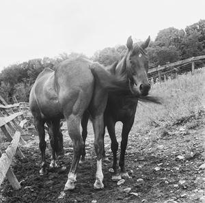 Blind mare (pair bond) by Moyra Davey contemporary artwork photography