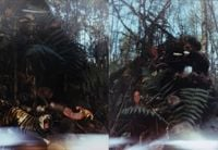 Foret 1 (Forest 1), Foret 2 (Forest 2) by Kim Soun-Gui contemporary artwork photography