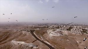 As Birds Flying by Heba Y. Amin contemporary artwork