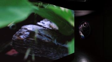 Contemporary art exhibition, Rei Hayama, The Pearl of Tailorbird at Empty Gallery, Hong Kong
