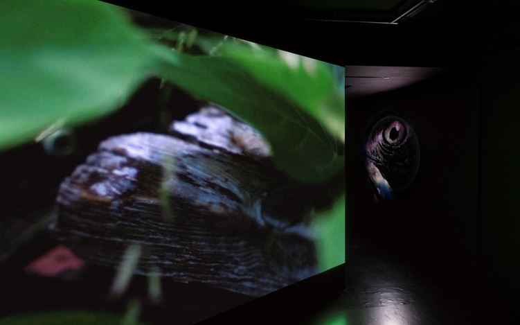 Exhibition view: Rei Hayama, ThePearl of Tailorbird, Empty Gallery, Hong Kong (15 December 2018–January 26 2019). Courtesy Empty Gallery. Photo: Michael Yu.