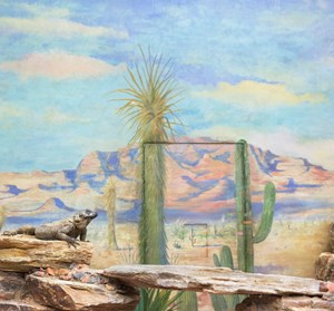 Reptile and cactus by Eric Pillot contemporary artwork