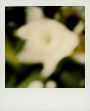Untitled (Lilly) by Walter Schels contemporary artwork photography