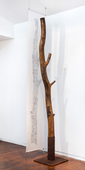 Black wattle tree trunk from Sawpit camp with suspended drawing by John Wolseley contemporary artwork