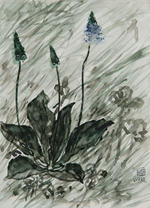 Plantago Asiatica II by Lin Chuan-Chu contemporary artwork