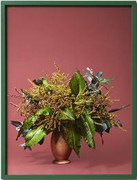 The Seamstress, Dock (Rumex obtusifolius L) by Ann Shelton contemporary artwork photography