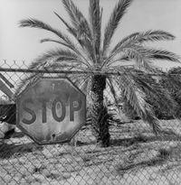 Phoenix, Arizona by Lee Friedlander contemporary artwork photography