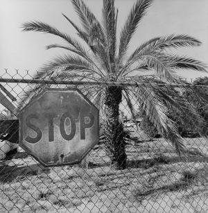 Phoenix, Arizona by Lee Friedlander contemporary artwork
