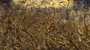 Contemporary art exhibition, Anselm Kiefer, Field of the Cloth of Gold at Gagosian, Le Bourget