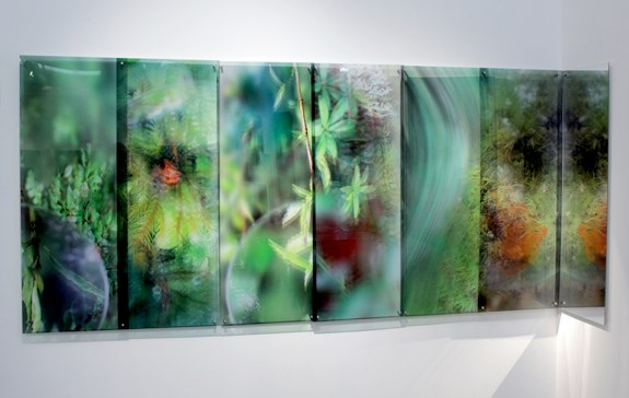 What a Plant Knows (the Tarkine, Tasmania) by Janet Laurence contemporary artwork
