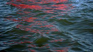 Riflessi (Red Regatta - 15 September 2019) - 2 by Melissa McGill contemporary artwork
