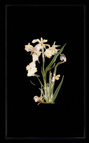 Infinite Herbarium Morphosis #1 by Caroline Rothwell contemporary artwork moving image