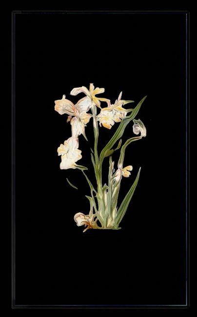 Infinite Herbarium Morphosis #1 by Caroline Rothwell contemporary artwork