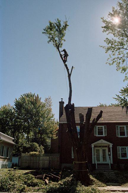 Men and Trees #1 by Noguchi Rika contemporary artwork