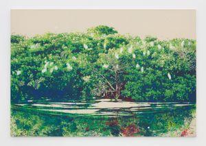 Les Oiseaux (Mangrove) by Alexandre Lenoir contemporary artwork