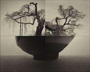Yoritomo Sakura (C934) by Keiichi Ito contemporary artwork