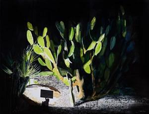 Cactus (Ibiza) by William Mackinnon contemporary artwork