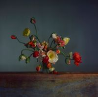 Flowers, Day 2 by Richard Learoyd contemporary artwork photography