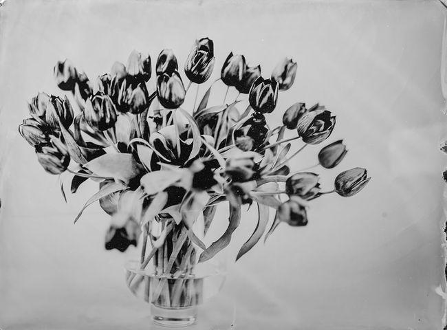 Tulips by Steffen Diemer contemporary artwork