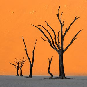 Deadvlei Sunset by Stephen King contemporary artwork