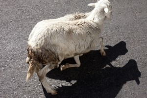 sheep shadow by Wolfgang Tillmans contemporary artwork