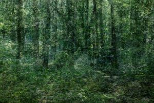 A Forest by Kim Boske contemporary artwork