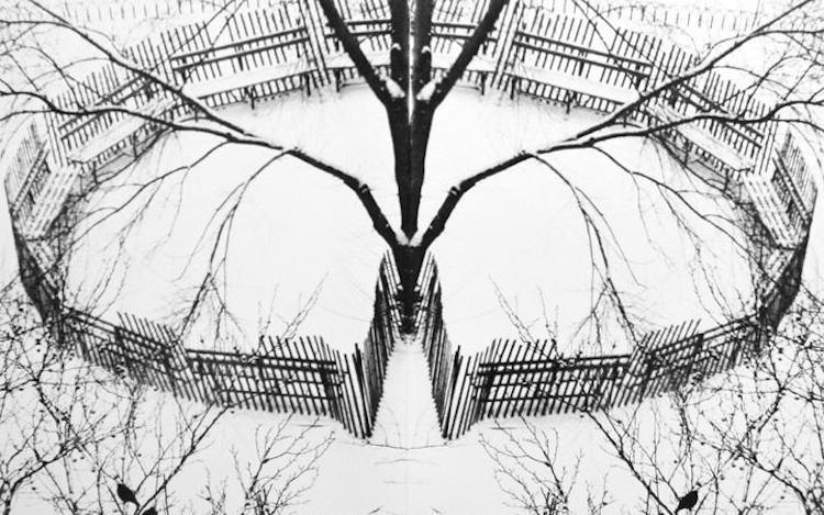 André Kertész, Winter Garden, New York (1970) (detail). Gelatin silver print, printed c. 1970. Courtesy Bruce Silverstein.