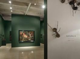 Last days to see 'Naturalia,' an homage to natural history, at Paul Kasmin Gallery