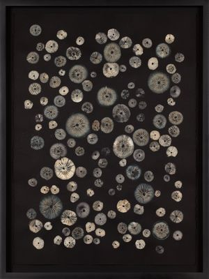 Untitled by Adam Fuss contemporary artwork