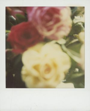 Untitled (Roses) by Walter Schels contemporary artwork photography