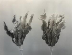 Gardenia-Auspiciousness by Chu Chu contemporary artwork