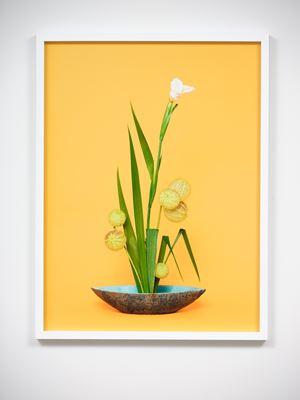 The Super Model, Iris (Iridaceae sp.) by Ann Shelton contemporary artwork