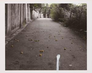 Apricot by Honggoo Kang contemporary artwork