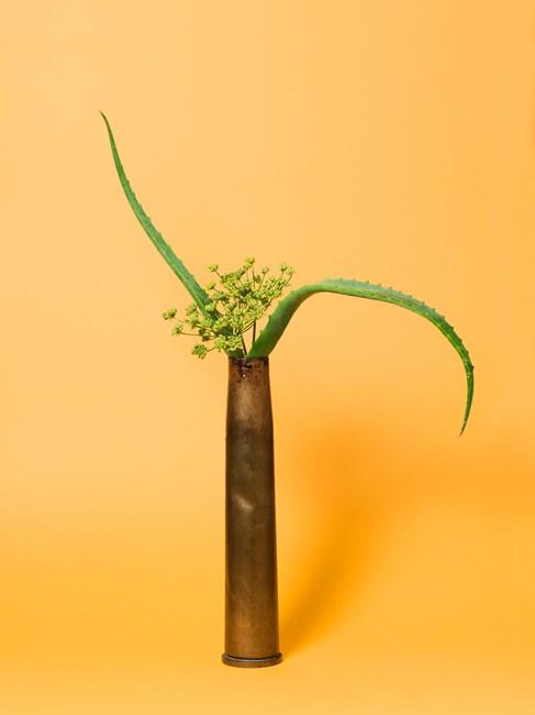The Kept Woman, Aloe (Aloe sp.) by Ann Shelton contemporary artwork