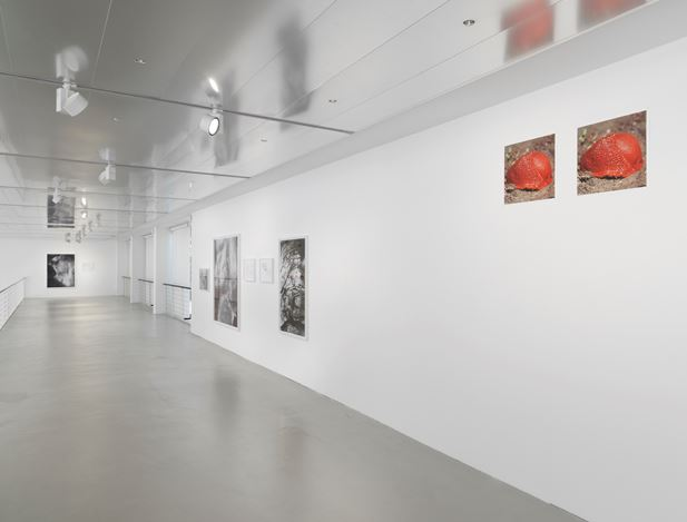 Exhibition view: Peter Piller, Geduld, Capitain Petzel, Berlin (21 June–3 August 2019). Courtesy the artist and Capitain Petzel, Berlin. Photo: Jens Ziehe.