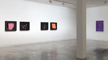 Contemporary art exhibition, Greta Anderson, Conor Clarke, Ann Shelton, Shaun Waugh, Cracker at Two Rooms, Auckland