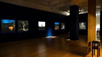 Contemporary art exhibition, Sim Chi Yin, One Day We'll Understand 「總有一天我們會明白」 at Hanart TZ Gallery, Hong Kong