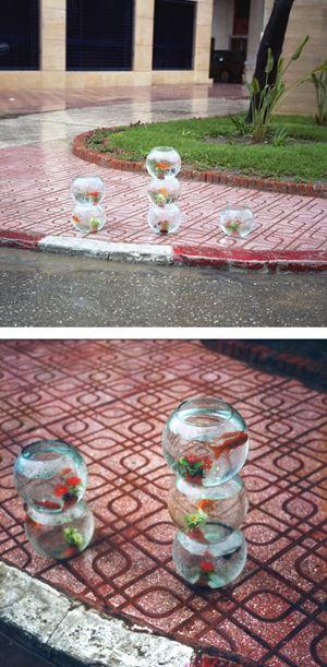 Aquariums for Sale on a Rainy Day, Tangier, 2001 (For Parkett 91) by Yto Barrada contemporary artwork