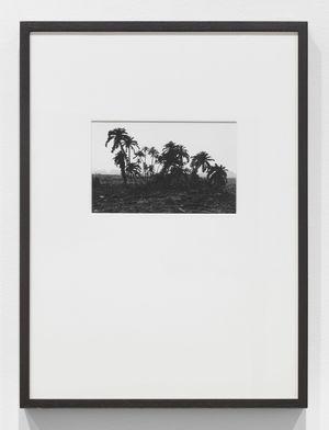 Tropen, Palmen by Lothar Baumgarten contemporary artwork