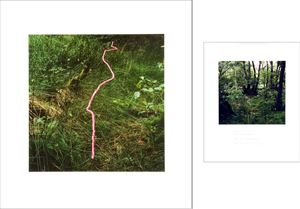 Foxgloves threaded onto rushes Scaur Glen, Dumfriesshire by Andy Goldsworthy contemporary artwork