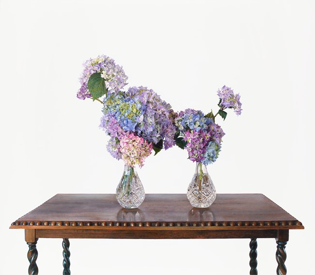 The Poodle by Michael Zavros contemporary artwork