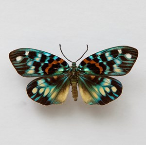 Butterfly #3 by Krisada Suvichakonpong contemporary artwork