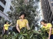 'Micro-forest' of endangered species takes over city laneway