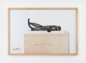 Untitled (leopard) by Paola Pivi contemporary artwork