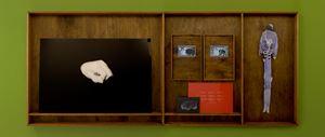 Disturbances by Robert Zhao Renhui contemporary artwork