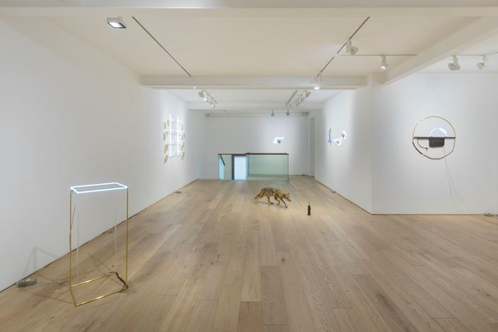 Exhibition view: Gabriel Rico, The Stone, The Branch and The Golden Geometry,Perrotin, Seoul (11 July–7 September 2019). © Courtesy the artist and Perrotin.Photo: Youngha Jo.