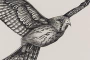 Inseparable (Nankeen Kestrel) by Patricia Piccinini contemporary artwork 8