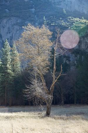 Tree by Catherine Opie contemporary artwork