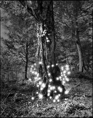 Photo Respiration Trees Shirakami #2 by Tokihiro Sato contemporary artwork